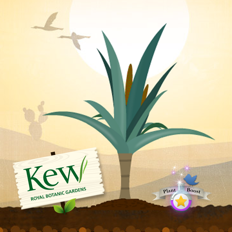 Kew – Tweet & Grow